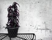 Dark Plant On Concrete Wall Background