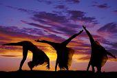 Silhouette Woman Cartwheel Series