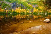 Painterly Pond