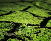 stock photo of dead plant  - Green plant growing trough dead soil - JPG