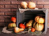 Pumpkins in crate on floor on brick wall background