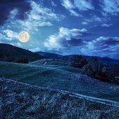 Trees On Autumn Meadow In Mountains At Night