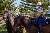 Police horses and riders