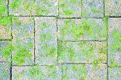 Mossy Brick Floor
