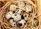 Quail eggs in coconut nest