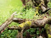 Fallen Tree Overgrown With Moss