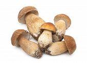 Fresh Mushrooms Closeup On White Background