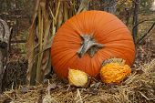 Thanksgiving Display Of Pumpkin And Gourds