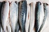 Cleaned And Gutted Mackerel