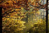 Sun Light Through Foliage In Autumn