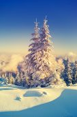 Fantastic landscape glowing by sunlight. Dramatic wintry scene. Natural park. Carpathian, Ukraine, Europe. Beauty world. Retro style filter. Instagram toning effect. Vivid violet. Happy New Year!