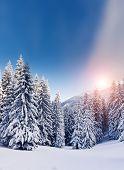 Fantastic landscape glowing by sunlight. Dramatic wintry scene under blue sky. Carpathian, Ukraine, Europe. Beauty world. Retro filter. Instagram toning effect. Happy New Year!
