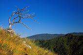 Dead tree on the mountainside against blue sky