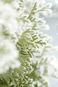 Close up on Christmas tree covered with snow