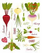 Root Vegetables with Greens Signs and Symbols Design Collection
