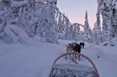 stock photo of laplander  - Husky sledge ride at sunset in winter wonderland  - JPG