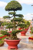 stock photo of bonsai tree  - Bonsai trees at City flower garden in Dalat - JPG