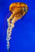 pic of nettle  - The Large Dangerous - JPG