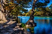 picture of crystal clear  - Rocky River Bed of the Crystal Clear Frio River.  Fall foliage on Bald Cypress Trees.