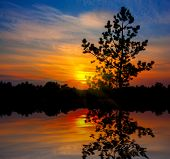 image of pine-needle  - pine tree on sunset background with water reflection - JPG