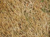 Dead Grass