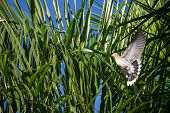 picture of grass bird  - Scared bird in the grass taking flight - JPG
