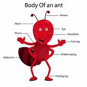 picture of mandible  - Illustrator body of ant cartoon and education - JPG