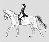 picture of horse-riders  - rider on the horse  - JPG