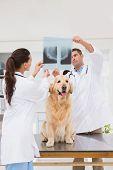 pic of animal x-ray  - Veterinarian coworker examining dogs x - JPG