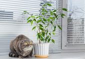 picture of boring  - Sad cat on the windowsill. She is bored.