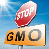 picture of genetic engineering  - stop the gmo and genetic manipulated organisms or food engineering altered by transgenic organism plants or animals - JPG
