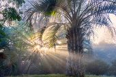 stock photo of early morning  - Early winter morning in Uruguay - JPG