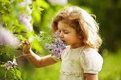 picture of beatitudes  - little girl inhales the aroma of lilacs - JPG