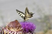 foto of butterfly  - Close up butterfly - JPG