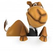 foto of camel  - Fun camel - JPG