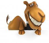 pic of camel  - Fun camel - JPG