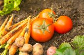 stock photo of carrot  - Carrots potatoes and carrots lying naturally on soil ground - JPG