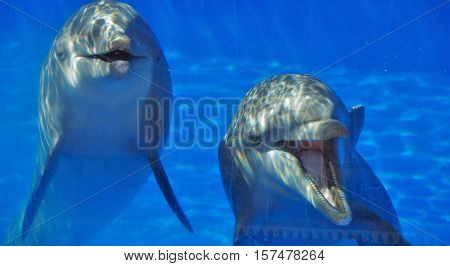 two dolphins in a glass dolphin pool