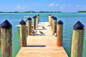 Boat Dock  In Tropics With Seagulls