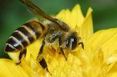 Flores e abelha pequena