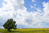 spring landscape  - green grass and blue sunny sky