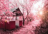Pink spring(infrared photo)