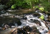 Mountain Stream In Summer