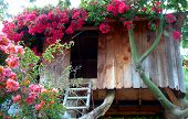 stock photo of tree house  - a charming little treehouse adorned with pretty pink flowers - JPG