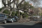 Car trapped under fallen tree after wind storm. Los Angeles, California.