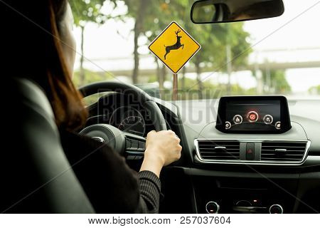 Woman Driving A Car On