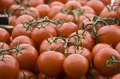 Fresh Market Tomatoes