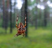A beautiful spider in a forest.