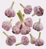 Garlic set on the white background