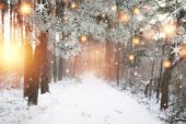 Christmas Background. Winter Forest With Glowing Snowflakes. Christmas Forest With Snowy Road. Pine  poster